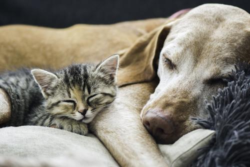 より良いペット生活に!CBDオイルを利用したペットのケア方法
