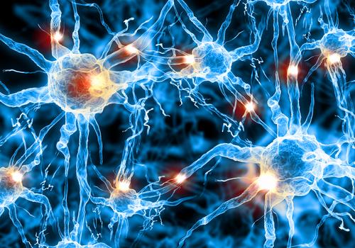 カンナビノイドの可能性が分かる!内在性カンナビノイドシステム概論