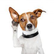 CBD製品をペットに与える前に知っておくべき5つのこと