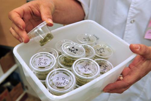 専門家の見解:緩和ケアとしての医療大麻