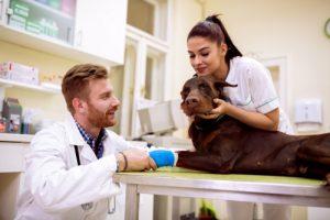 CBDオイルが見せた愛犬の発作に対する抑制効果
