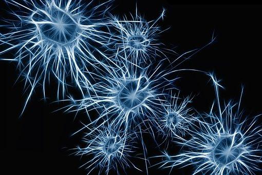 メカニズムを知る:神経伝達システムとカンナビノイド