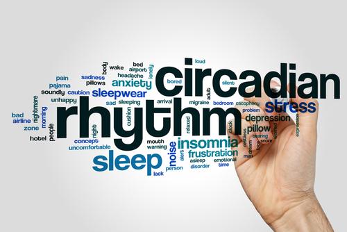 睡眠に深く関係するエンドカンナビノイドと概日リズム