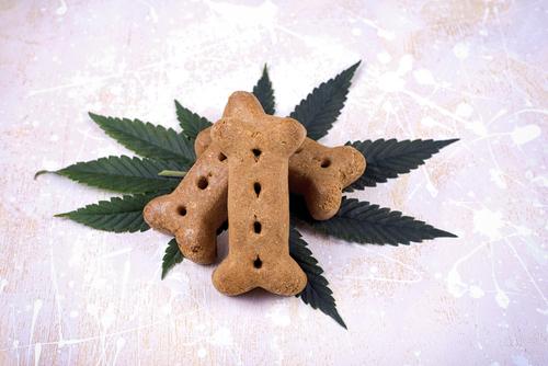 ペットが高濃度THC大麻を食べてしまった時の5つの対処ステップ