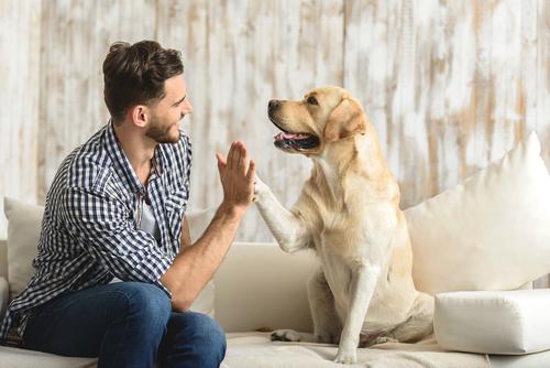 愛犬にも効果!CBDオイルが症状を緩和する