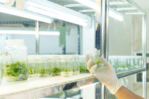大麻成分の抗がん作用に関する前臨床研究で有益な効果