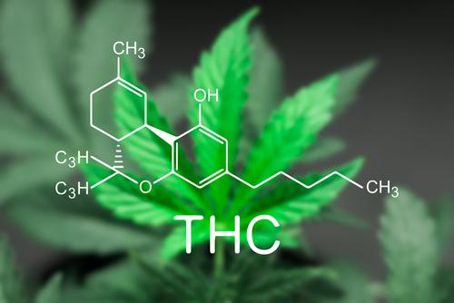 テトラヒドロカンナビノール(THC)について知るべきこと